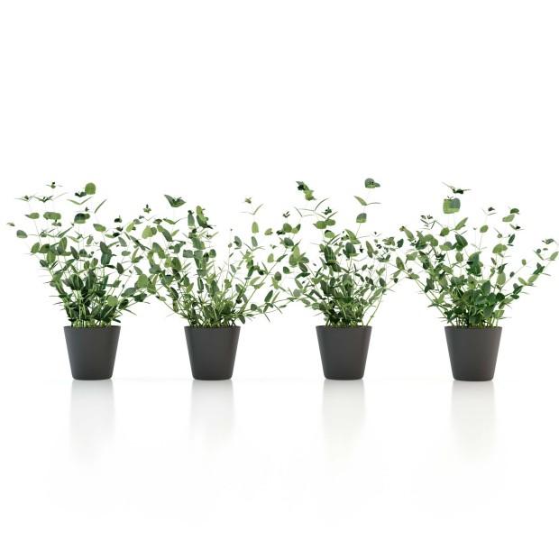 le_kitchenplants_mint